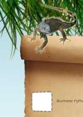 Reptile Scavenger Hunt Dublin Zoo
